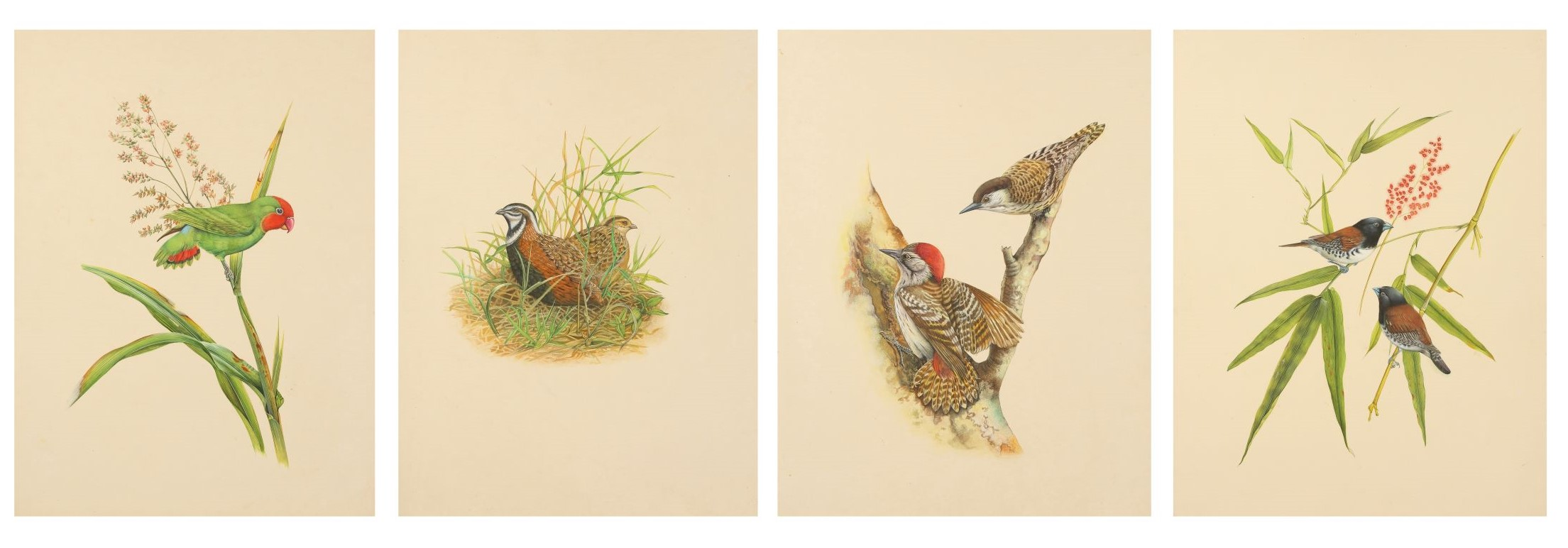 Lot 326. Four studies of birds in their natural habitat