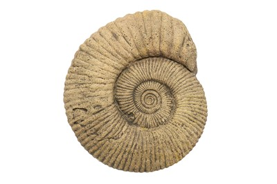 Lot 19A-A LARGE AMMONITE FOSSIL  likely to have...
