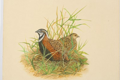 Lot 326 - FOUR STUDIES OF BIRDS IN THEIR NATURAL HABITAT