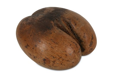 Lot 38-A POLISHED COCO DE MER NUT (LODOICEA MALDIVICA)...