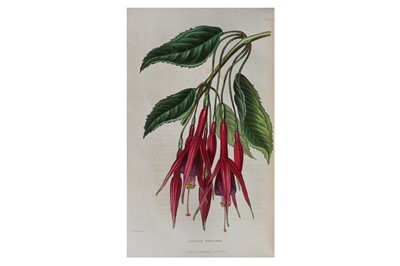 Lot 8-Botany.- The Florist's Journal for the year...