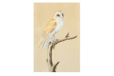 Lot 324 - A STUDY OF AN INDIAN BARN OWL (TYTO ALBA)