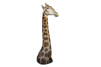 Lot 44-A TAXIDERMY HEAD AND SHOULDERS OF A GIRAFFE