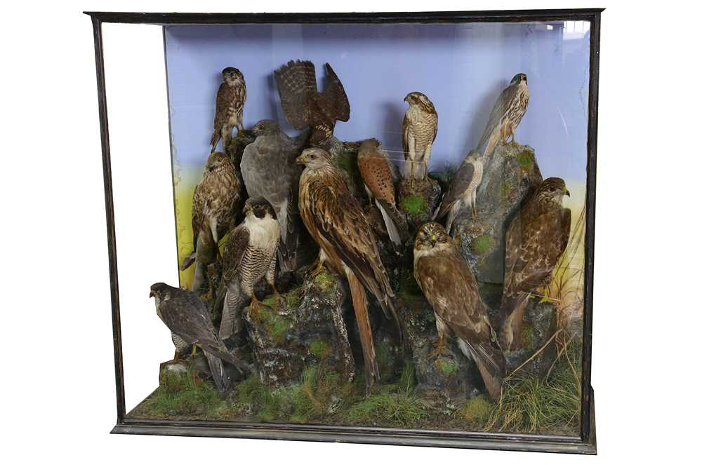 Lot 3 - A VICTORIAN TAXIDERMY GROUP OF RAPTORS