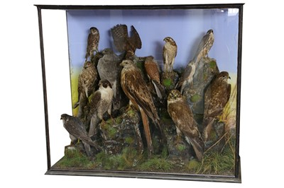 Lot 3-A VICTORIAN TAXIDERMY GROUP OF RAPTORS
