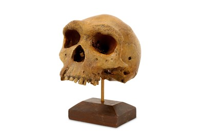 Lot 3-A COMPOSITION CAST OF A HUMAN SKULL