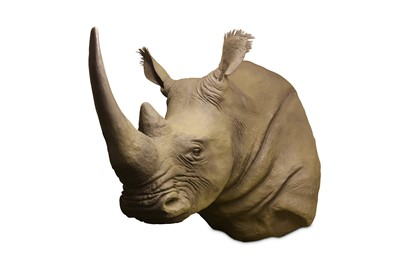 Lot 47-TAXIDERMY INTEREST:  A LIFE-SIZE FIBREGLASS MODEL OF A RHINOCEROS SHOULDER MOUNT