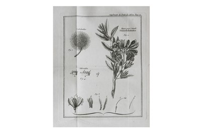 Lot 12-Botany.- Duhamel du Monceau (Henri Louis)