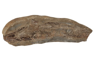 Lot 23-A SMALL FOSSIL FISH