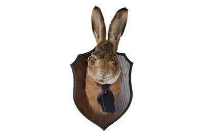 Lot 7-AN ANTHROPOMORPHIC TAXIDERMY TROPHY OF A GENTLEMAN HARE