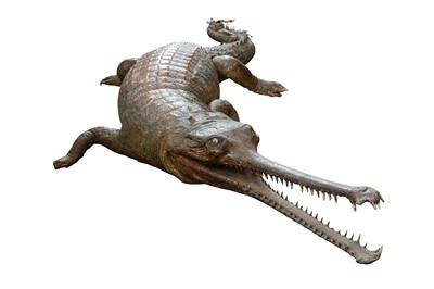 Lot 154 - A VERY LARGE AND RARE LATE 19TH CENTURY WHOLE TAXIDERMY GHARIAL (GAVIALIS GANGETICIUS)