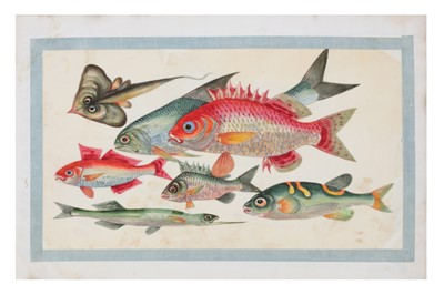 Lot 73-A LATE 19TH / EARLY 20TH CENTURY FOLIO OF CHINESE PAINTINGS OF FISH ON RICE PAPER