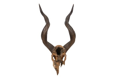 Lot 4-TAXIDERMY INTEREST: TWO PAIRS OF HORNS