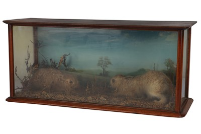 Lot 10-AN EARLY 20TH CENTURY ENGLISH CASED TAXIDERMY OF LEVERETS