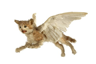 Lot 29 - THE FAMOUS TAXIDERMY WINGED KITTEN