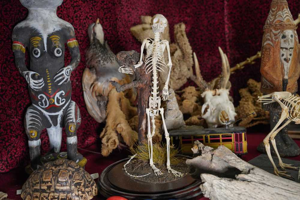 Lot 20 - A SMALL MONKEY SKELETON UNDER A GLASS DOME