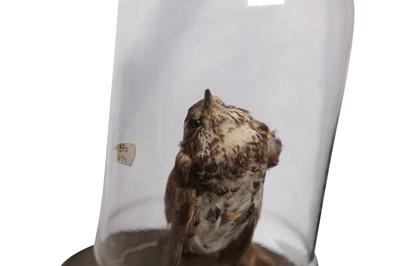 Lot 6 - AN EXPERIMENT ON A BIRD IN AN AIR PUMP