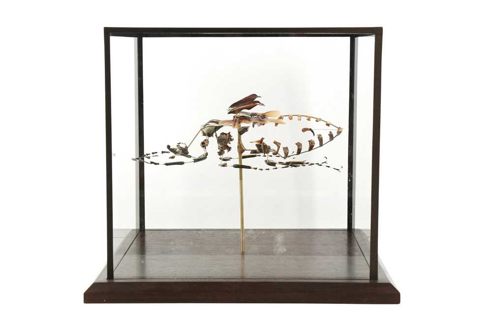 Lot 34 - A BEAUCHENE BEETLE IN CUBIC DISPLAY CASE