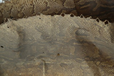 Lot 38 - AN EARLY 20TH CENTURY ROCK PYTHON SKIN