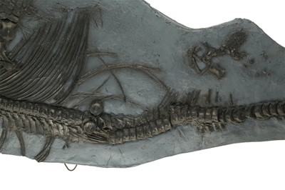 Lot 39 - A PAINTED CAST OF AN AQUATIC DINOSAUR FOSSIL