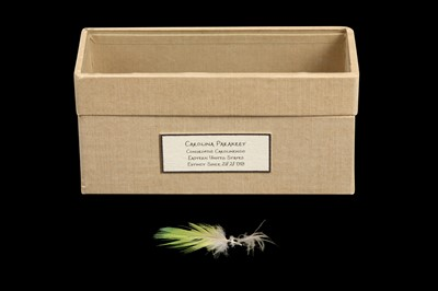 Lot 16 - RELICS OF EXTINCT BIRDS:  A FEATHER OF A CAROLINA PARAKEET, CONUROPSIS CAROLINENSIS