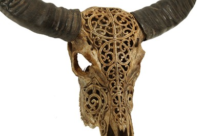 Lot 30 - AN AMERICAN CARVED COW SKULL WITH HORNS