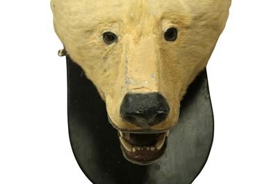 Lot 42 - A 19TH CENTURY TAXIDERMY POLAR BEAR HEAD