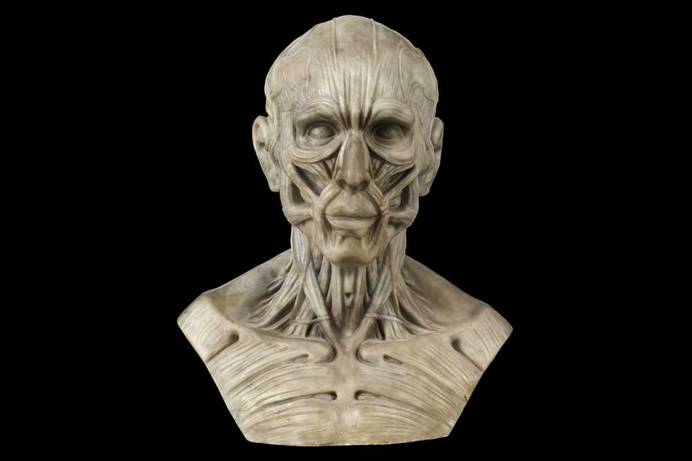 Lot 110 - AN ITALIAN MARBLE VANITAS BUST OF AN ECORCHE