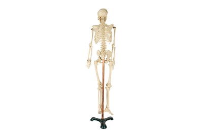 Lot 7 - A 20TH CENTURY RESIN TEACHING MODEL OF A HUMAN SKELETON