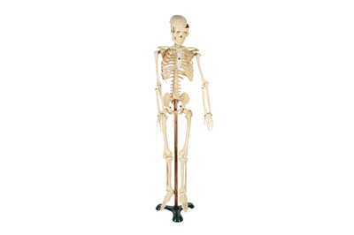 Lot 7A - A 20TH CENTURY RESIN TEACHING MODEL OF A HUMAN SKELETON