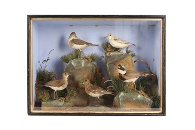 Lot 78 - A TAXIDERMY VICTORIAN MIXED CASE OF FIVE WADING BIRDS