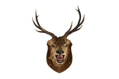 Lot 63 - A TAXIDERMY VICTORIAN STAG'S HEAD