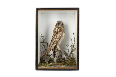 Lot 76 - A VICTORIAN TAXIDERMY  SHORT EARED OWL