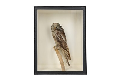 Lot 72 - A VICTORIAN TAXIDERMY HAWK OWL