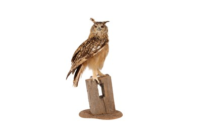 Lot 71 - A TAXIDERMY INDIAN EAGLE OWL ON BASE