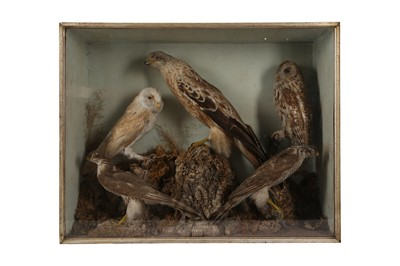 Lot 73 - A VICTORIAN TAXIDERMY CASE CONTAINING A RED KITE, BARN OWL, TAWNY OWL AND TWO SPARROW HAWKS