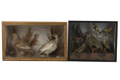 Lot 77A - TWO TAXIDERMY CASES OF BIRDS, LATE 19TH TO EARLY 20TH CENTURY