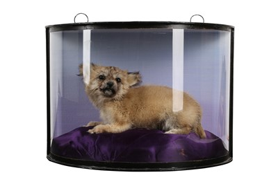 Lot 4 - A TAXIDERMY PUPPY IN DISPLAY CASE