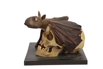 Lot 31 - A TAXIDERMY FRUIT BAT MOUNTED BESIDE A MODEL OF A HUMAN SKULL