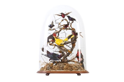 Lot 84 - TAXIDERMY: A VICTORIAN DOME DISPLAY OF EXOTIC AFRICAN BIRDS, LATE 19TH CENTURY