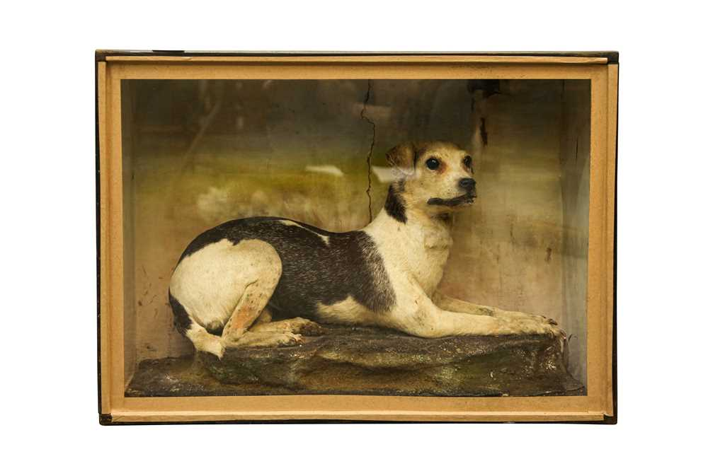 Lot 3 - TAXIDERMY: A VICTORIAN TERRIER DOG IN DISPLAY CASE