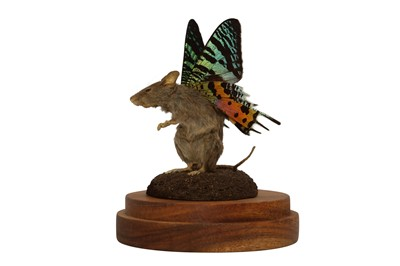 Lot 29 - TAXIDERMY: A FLUTTER-MOUSE IN GLASS DOME