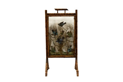 Lot 86 - A BAMBOO FIRESCREEN DISPLAY OF EXOTIC BIRDS AND BEETLES, IN THE MANNER OF ROWLAND WARD