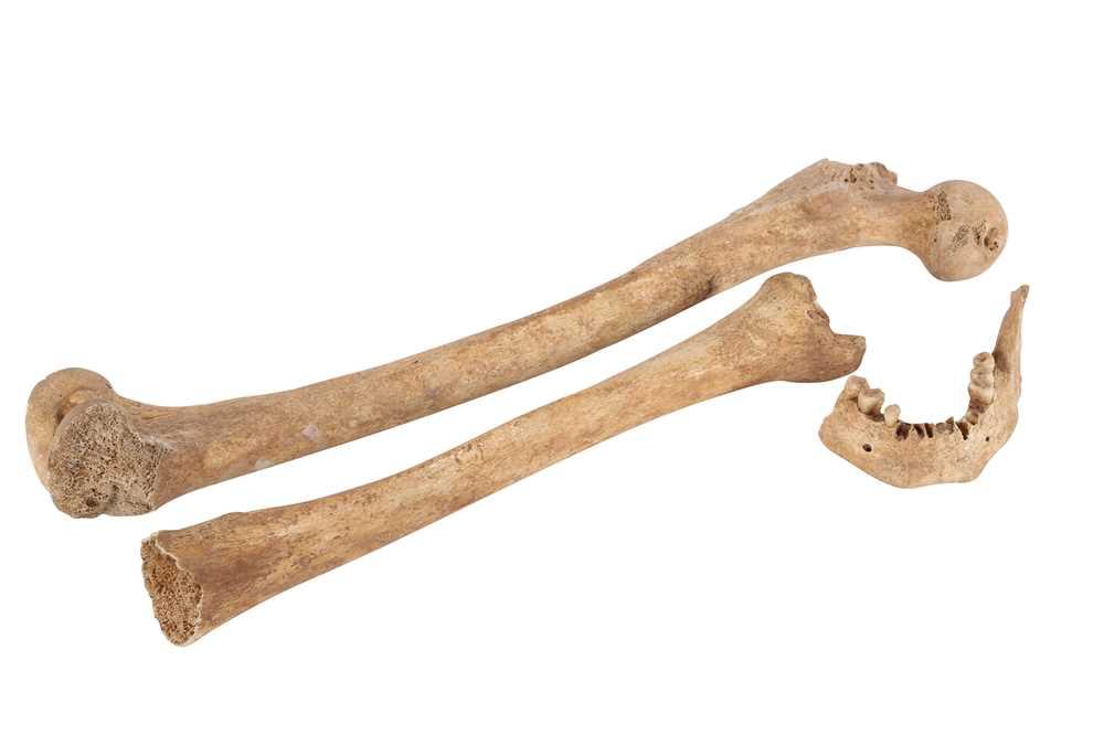 Lot 39 - ARCHEOLOGY /OSTEOLOGY: ROMAN HUMAN BONES