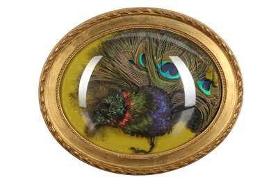 Lot 81 - TAXIDERMY: AN EXOTIC BIRD HEAD AND FEATHERS IN WALL DOME